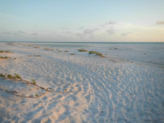 bradenton beach Hotels in bradenton beach: find the best bradenton beach hotels and save booking with expedia view over 440 bradenton beach hotel deals and read real guest reviews to help find the perfect.
