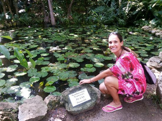 Xcaret Park: O contato com a natureza é constante em todo o parque.