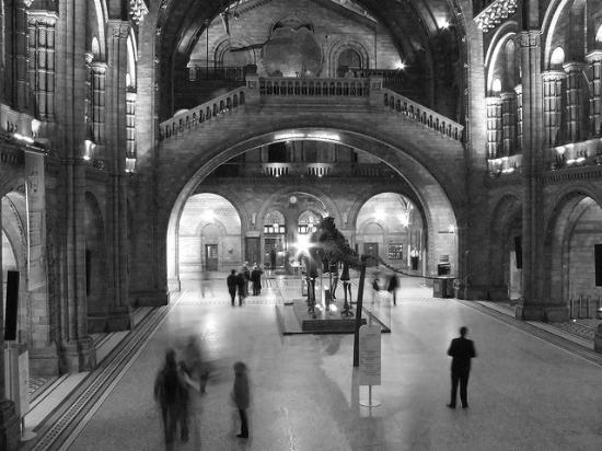 Foyer Museum London : Foyer picture of natural history museum london