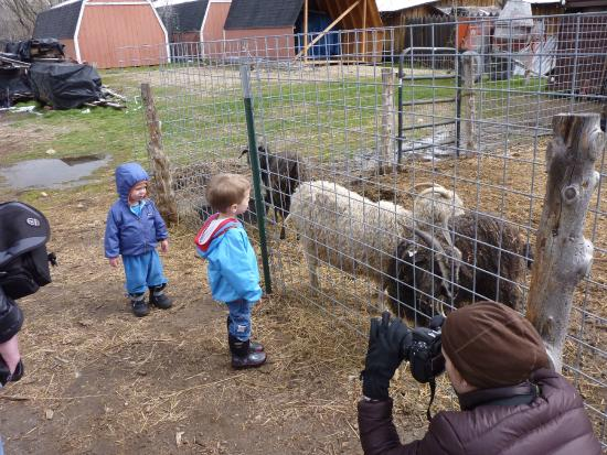 Wheeler Historic Farm: Up close to the livestock.
