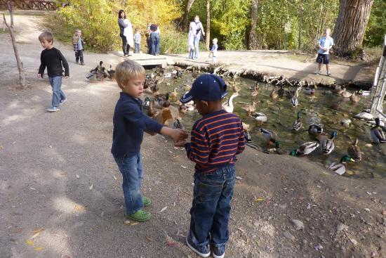 Wheeler Historic Farm: Feeding the ducks is a nice pastime at Wheeler!