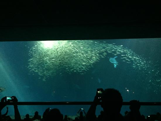 Touch Pool Picture Of Monterey Bay Aquarium Monterey