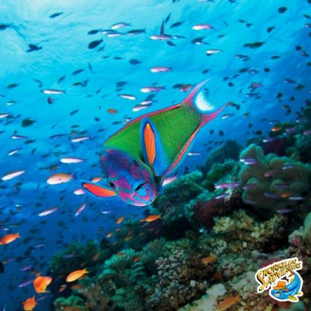 The Original Snorkeling Adventure: Come join us on snorkeling adventure
