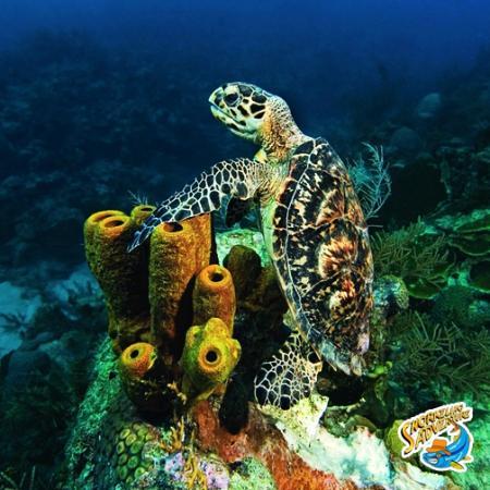 The Original Snorkeling Adventure: Amazing Marine Life!