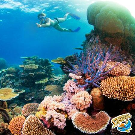 The Original Snorkeling Adventure: In search of a new snorkeling experience? Follow us!
