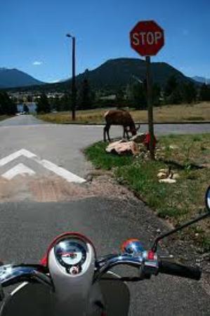 Estes Park Scooter Rentals: Estes Park Scooter Rental