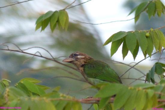 Nelpura Heritage Homestay: Backwaters the world of birds