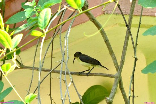 Nelpura Heritage Homestay: Backwaters the world of birds