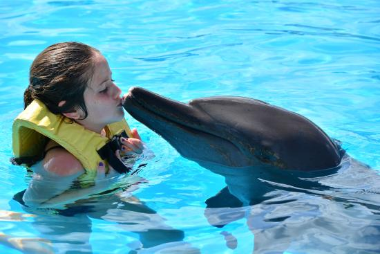 swimming with dolphins picture of fiesta americana condesa cancun