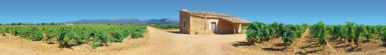 Consell, Ισπανία: Vineyard