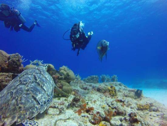 Cozumel Dive School