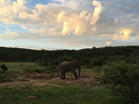 Makweti Safari Lodge : View from the main deck.