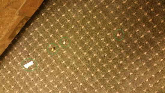 Drury Inn & Suites Amarillo : Food and garbage on carpeting
