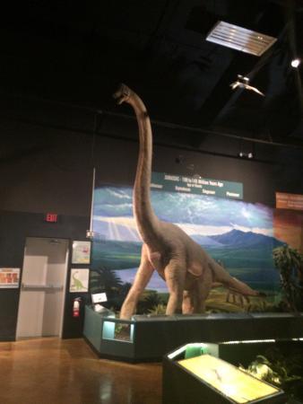 Naranjo Museum-Natural History