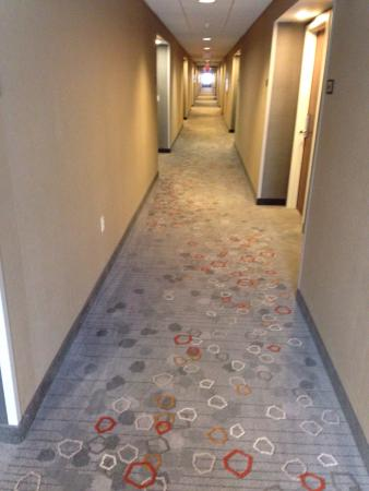 Peachy The New Carpet And Wall Covering In The Renovated Hallways It Is Largest Home Design Picture Inspirations Pitcheantrous