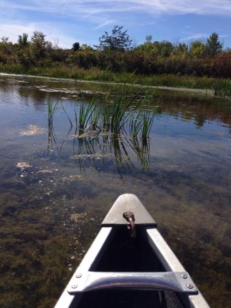 Little Cataraqui Creek Conservation Area : You can rent a canoe for a tranquil survey of the marsh. Family fun!