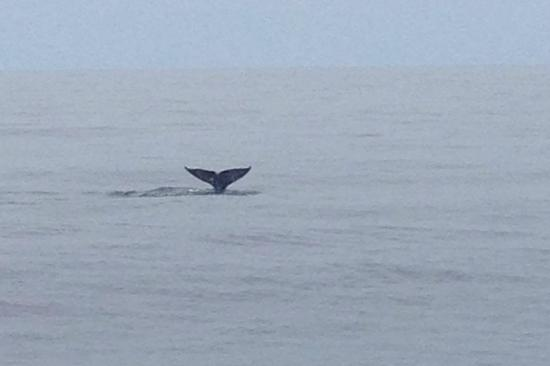 Dana Point, كاليفورنيا: Nothing Like Whale Tails