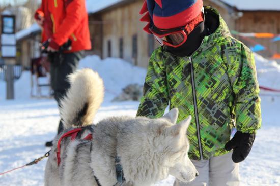 Braeburn Siberians: Instant friends.