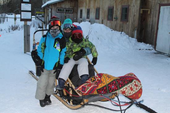 Braeburn Siberians: our sled was comfy!