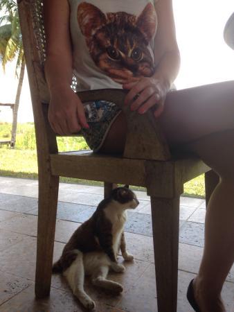 Nam at Bon Ton: Kitties to dine with