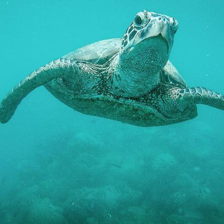Airlie Beach, Australia: Sea turtle