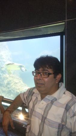 Taraporewala Aquarium: olive reedley turtle