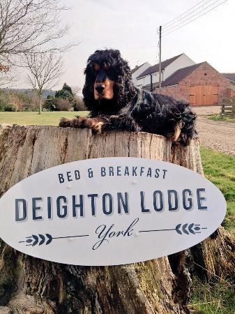 Bracken loves Deighton Lodge
