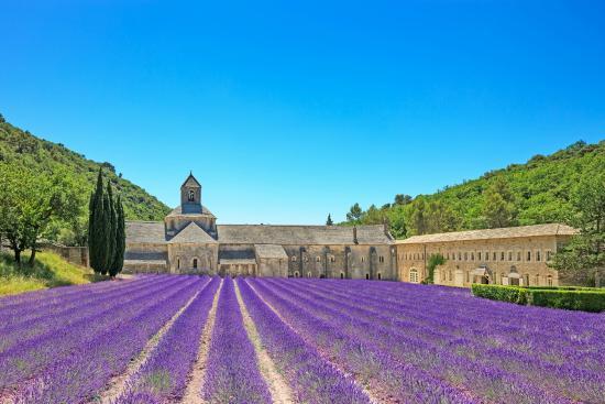 IBIS BUDGET CAVAILLON : Abbaye de Senanque, Lubéron en juillet
