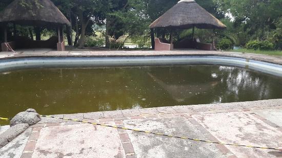 Island Safari Lodge: Poor pool