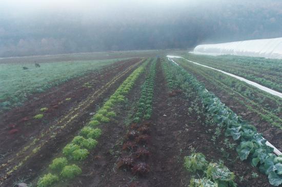 Hamden, Estado de Nueva York: Lucky Dog Farm - where, during growing season, we get produce.
