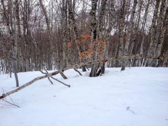 Formigal Ski Resort : Fora de Pista no Bosque