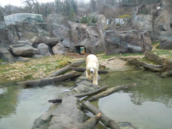 Wien, Österreich: polar bear