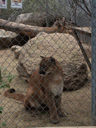Southwest Wildlife Conservation Center: Such a cat
