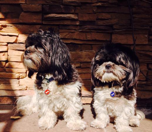 Flying Star Cafe - Rio Grande : Dogs enjoying the 'Petio'