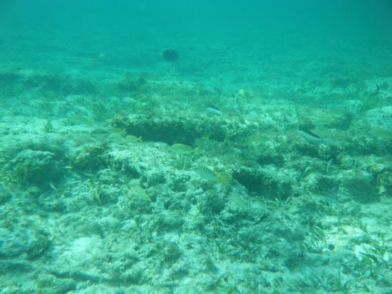 snorkeling from beach - ラス・...