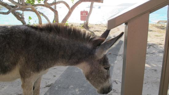 Scott Beach : Daily donkey migration