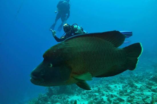 Perfect reefs foto di reef oasis dive club sharm el - Reef oasis dive club ...