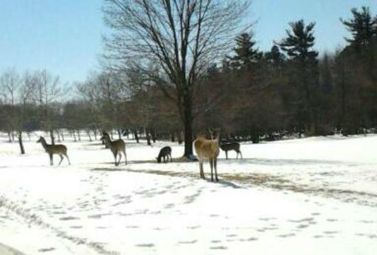 Mendon Ponds Park : Deer...
