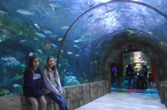 Tan Cerca De Los Peces Picture Of Audubon Aquarium Of