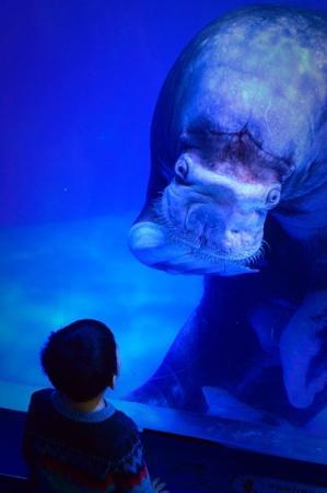 Royal Ocean World : Aquarium was great!