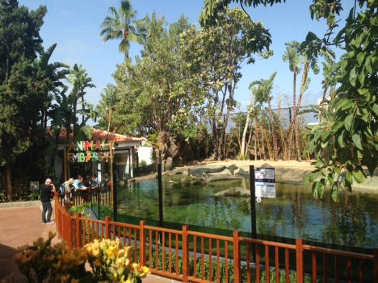The dolphin show - breath taking! - Picture of Loro Parque ...