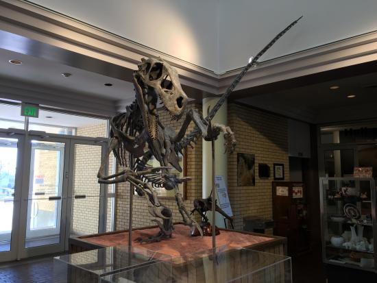 Utah State University Eastern Prehistoric Museum : UtahRaptor