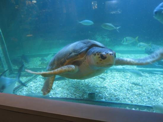 See Life Atlantic City Aquarium Historic