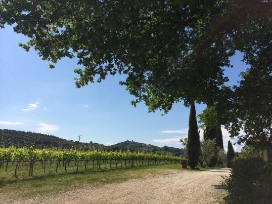 Villa Acquaviva: Panorama con vigneto e Montemerano