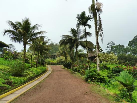 Arasha Tropical Rainforest Resort & Spa: Tropical landscape