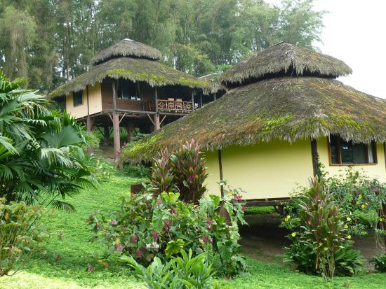 Arasha Tropical Rainforest Resort & Spa: Nice bungalows