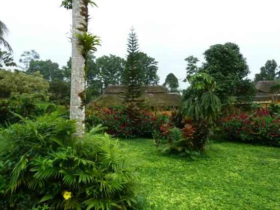 Arasha Tropical Rainforest Resort & Spa: Nice landscape