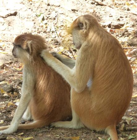 Reserve De Bandia: Bandia Reserve