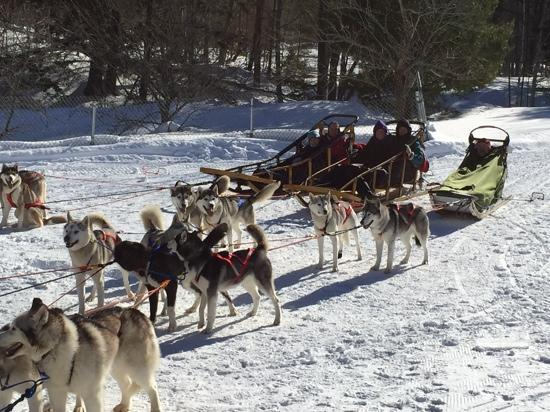 West Wardsboro, เวอร์มอนต์: Husky Works dog sledding fun!