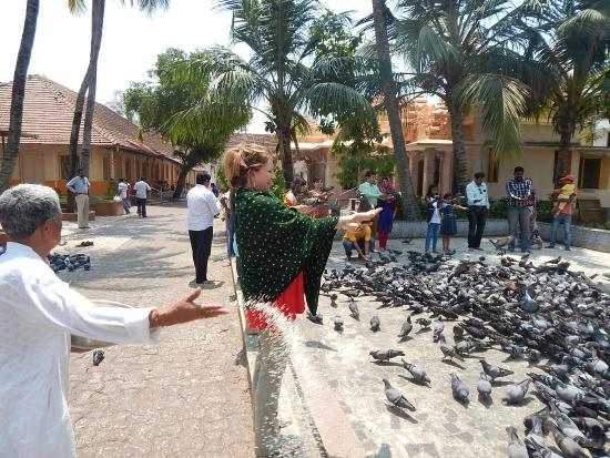 Jain Temple: pigeons